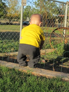 Robbie trying to do fence work at Granny's house!